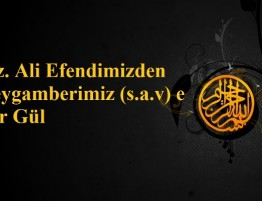 Hz.Ali Efendimizden Peygamberimiz (s.a.v) e Bir Gul